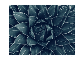 Agave Queen Succulent #1 #tropical #decor #art