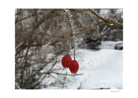 The Frozen Berries