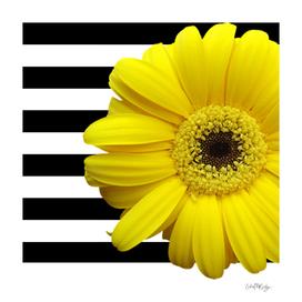 Yellow Daisy Flower Black & White Stripes