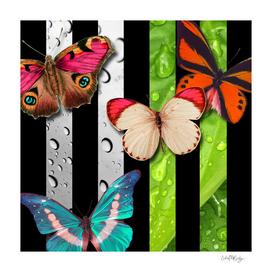 Vertical Stripes Butterflies Leaves & Water Drops