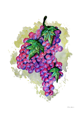 Purple Grapes from Africa