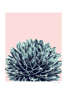 Blush Navy Blue Agave Chic #1 #succulent #decor #art