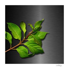 Green Leaves & Metallic Background