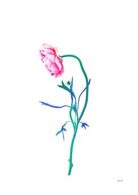 One Flower - Study 1. Profile