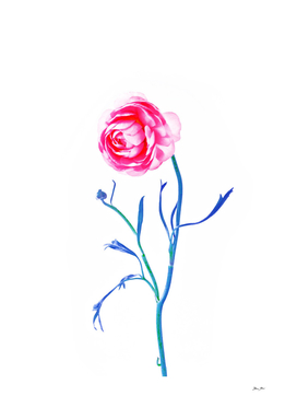 One Flower - Study 2. Front