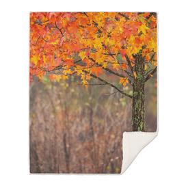 Autumn in Connecticut