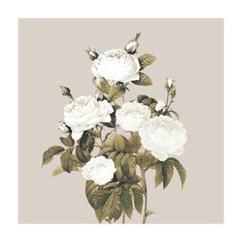 Minimal Whiterose