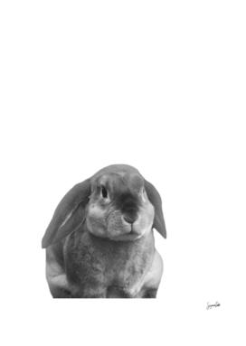 Mopsy Bunny