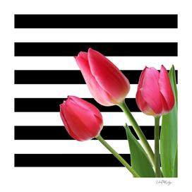 Black & White Horizontal Stripes Pink Tulips