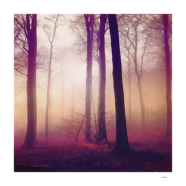 mysts - winter forest in fog
