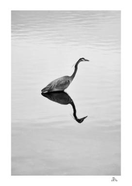 Heron & The Sea...