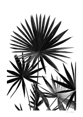 Fan Palm Leaves Jungle #4 #tropical #decor #art