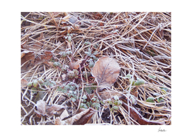 Frosty Forest Floor