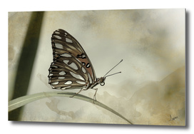 Passion butterfly