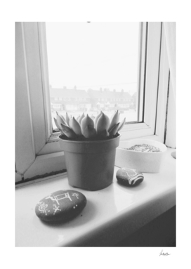 Window Ledge Succulent