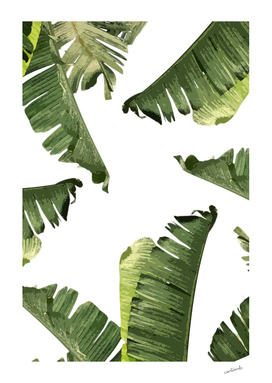 Banana Leaves-curioos