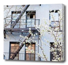 Brooklyn Spring