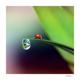 Ladybug on Wet Leaf Whimsical Nature