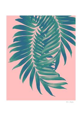 Palm Leaves Blush Summer Vibes #4 #tropical #decor #art