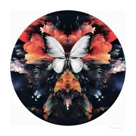 Papilio Unum