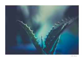 Abstract leaves aloe cactus, indoors, vintage blue