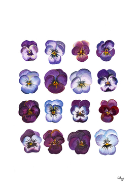 An illustration of Purple and Blue Violas