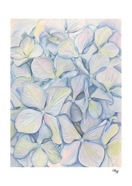 Summer Hydrangea in Blue