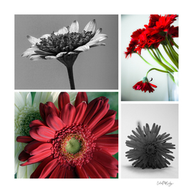 Flower Collage Floral Design
