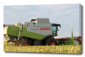 Evening Oats Harvest