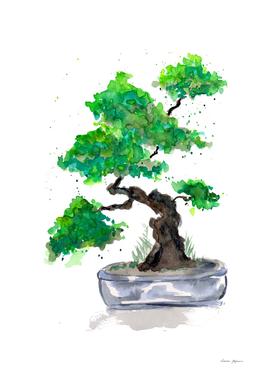 Green Bonsai Watercolor