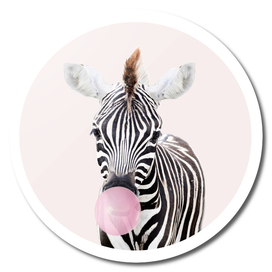 Zebra With Bubble Gum