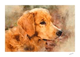 Brown Canine Dog