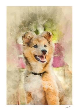 Cute Sheltie Dog