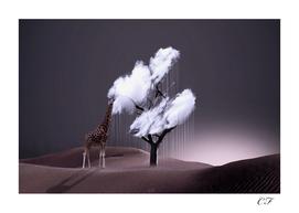 le parfum des nuages