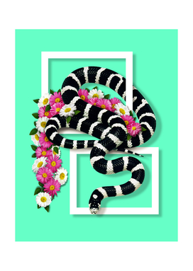 California kingsnake Flowery - Emerald Model