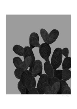 Gray Black Cactus #1 #succulent #decor #art