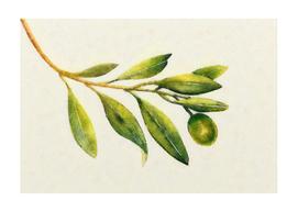 Branch life
