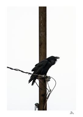 Prophetic Raven...