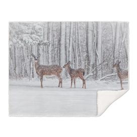 Winter Visits
