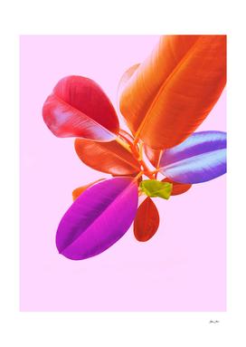 Minimal Pink Pop Foliage