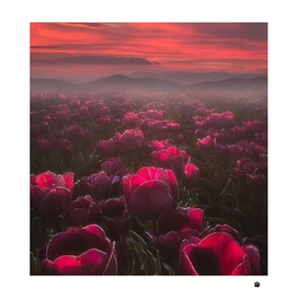 Beautiful flowergarden