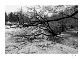 Trees and the lake of Central Park with snow in winter B&W