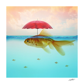 Under Cover Goldfish