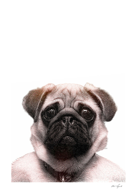 KEEP CALM pug print art pet dog animal puppy cute doggie