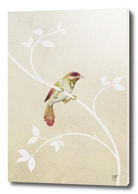 bird n° 3