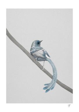 bird n° 2
