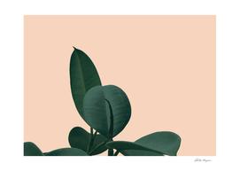 Rust Plant