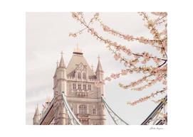 Tower Bridge Blooms