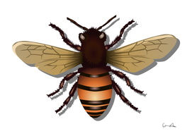 Honeybee bee insect fly honey