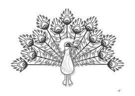 peacock plumage display bird